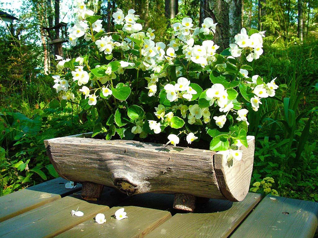Blumenkasten aus Holz für Tulpen