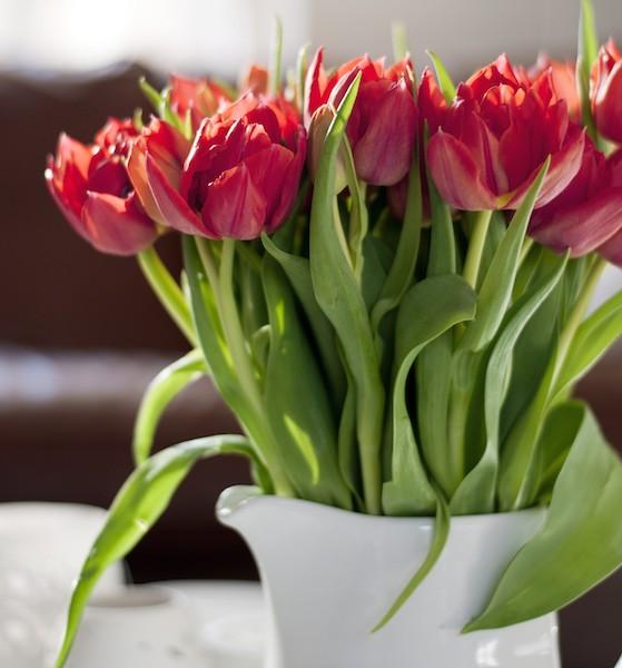 Tulpen im Zuhause
